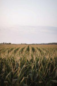 Odszkodowania dla rolników